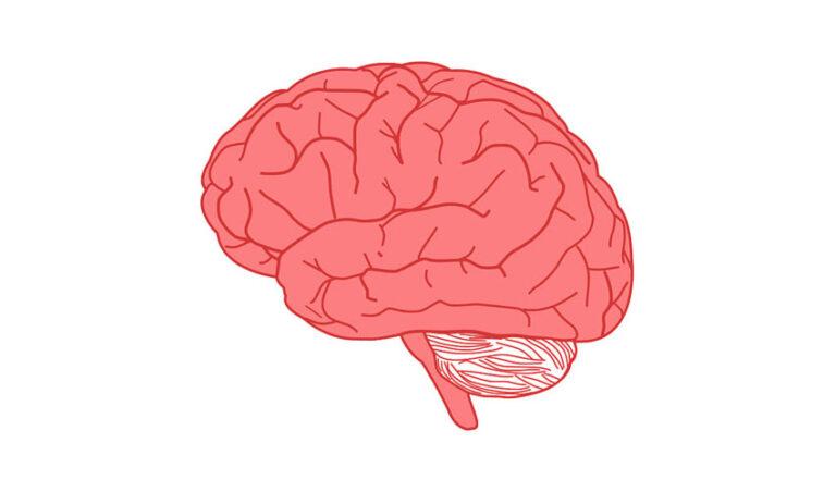 Kako »odkleneš« možgane?