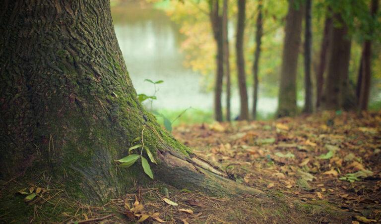 Vrnitev h koreninam