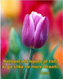 Tulipan-izrek