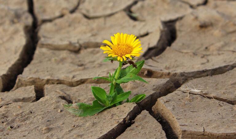 Čudeži so mogoči …