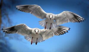 S tabo letim
